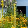 agencement-vegetalisation-jardin