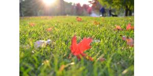 tondre pelouse automne